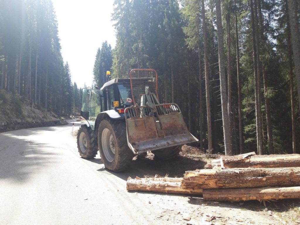 Forstunternehmen Ilmer Stefan - Durchforstung